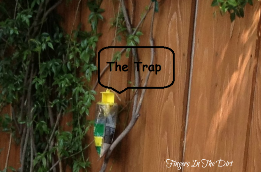 August Cleanup Fly Trap